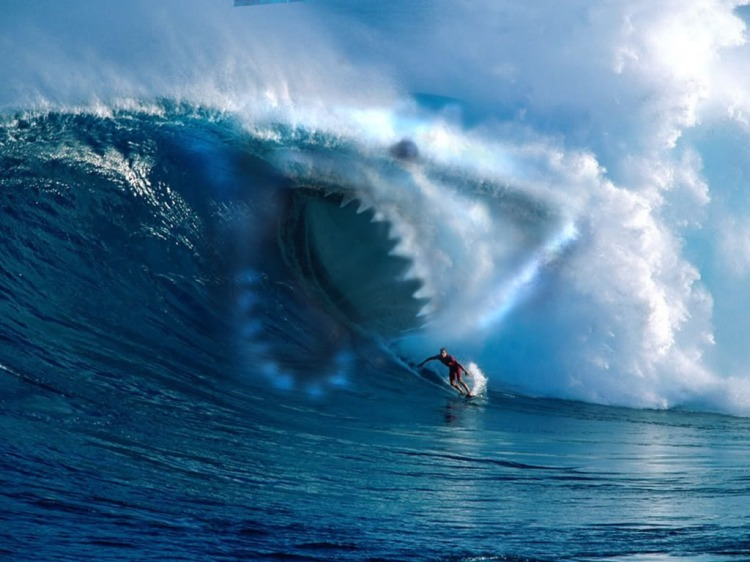 shark_surf