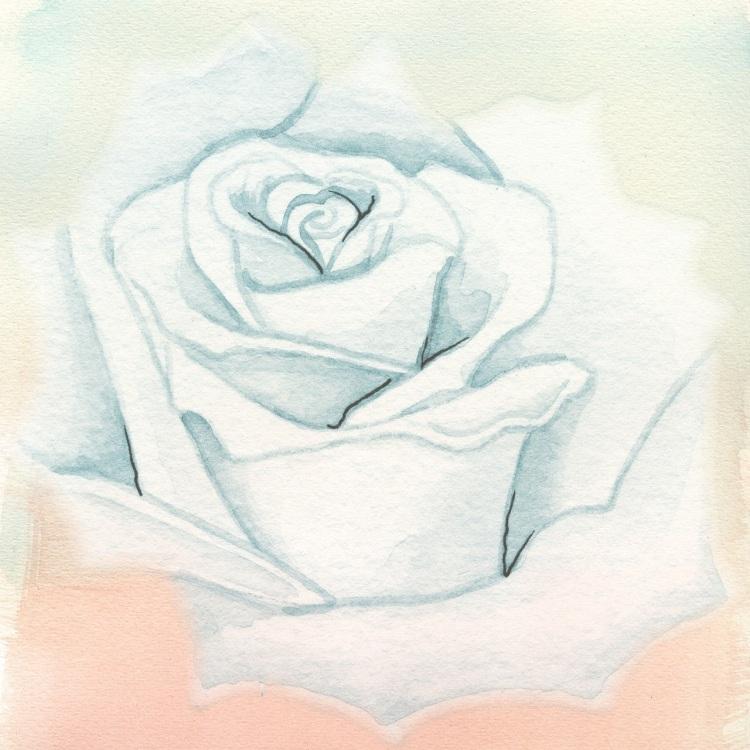 rose-2715653_1280